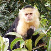 Gamboa Panama Rainforest Fauna