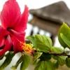 hotel-yandup-san-blas-islands-panama-flower