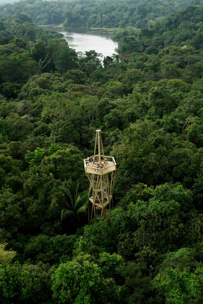 LA TORRE DE DISCOVERY RAINFOREST